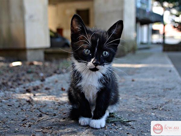 Что делать, если вы взяли котенка с улицы