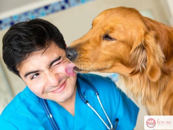 Ветеринар: ехать в клинику или вызвать специалиста на дом?