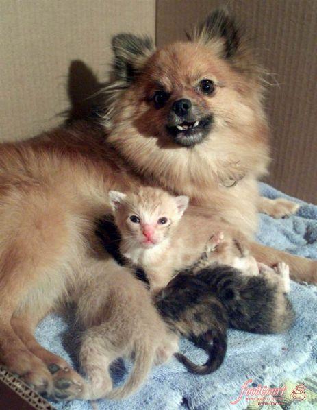 Животные в роли приемных родителей