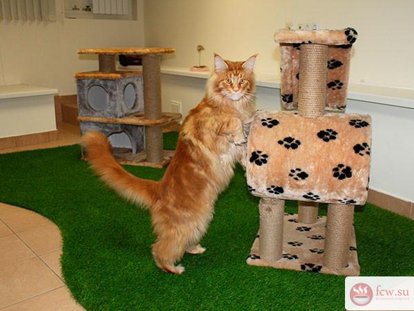 Что делать с котом, если хозяину необходимо уехать?