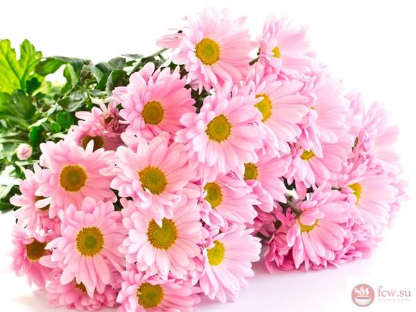 какие лучше подарить цветы плохо знакомой девушке